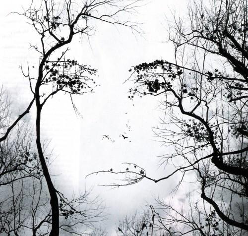 Rami o volto di donna.jpg